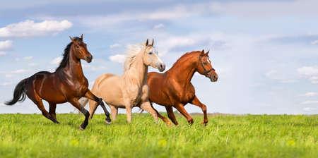 美しい緑の牧草地で 3 つの馬を実行します。