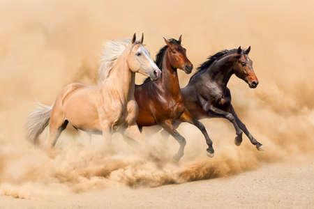 砂漠の砂の嵐で 3 つの馬を実行します。 写真素材