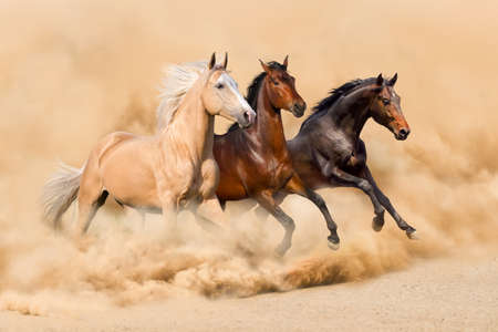 caballo: Tres caballos correr en arena del desierto tormenta