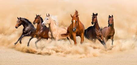 corriendo: Plazo manada de caballos en el desierto de arena tormenta