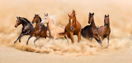 Horse herd run in desert sand storm Banque d'images