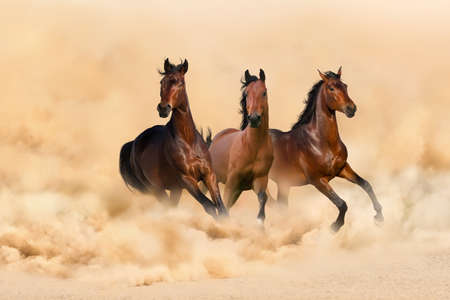 Three bay horse run gallop in desert dust Banco de Imagens