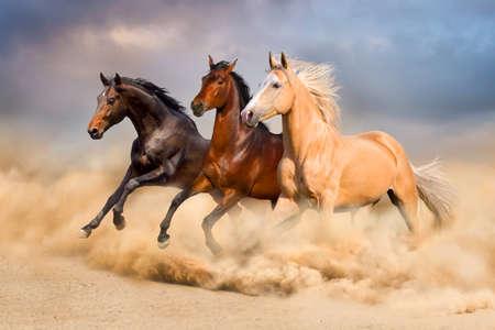 Horse run Archivio Fotografico