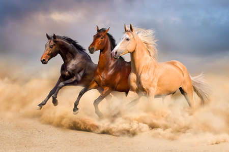 horses in the wild: Horse run Stock Photo