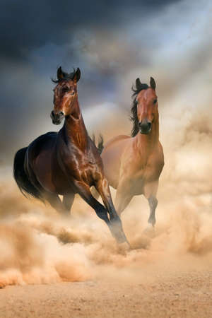 Bay horses run in desert dust against dramatic sky Фото со стока