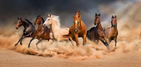 polvo: Plazo manada de caballos en tormenta de arena del desierto contra el cielo dram�tico