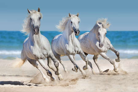caballo de mar: manada de caballos al galope en el mar ejecuta