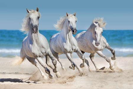 Mandria di cavalli eseguire galoppo in riva al mare Archivio Fotografico - 48094247