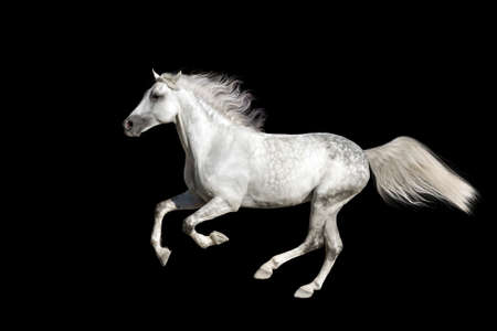 Horse with long mane isolated on black background Banco de Imagens