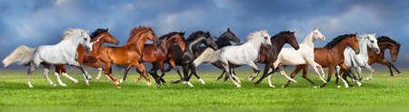 夏の牧草地のウェブサイトのバナーに馬の群れ