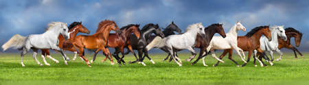 Herd of horses on summer pasture, banner for website Imagens - 50125832