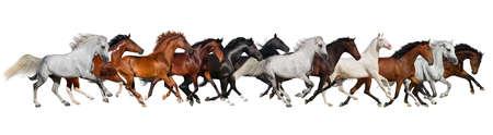 Stado koni na białym, banner na stronie internetowej
