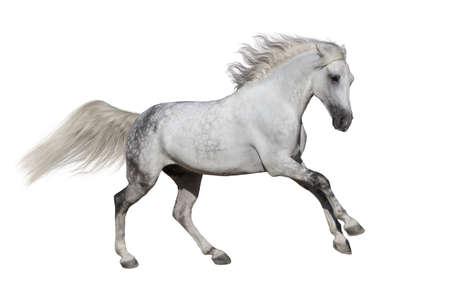 馬に分離ホワイト バック グラウンド実行