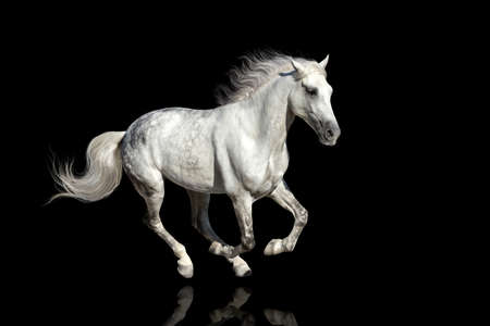 Horse with long mane isolated on black background Standard-Bild