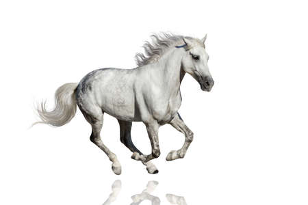 Paard lopen op een witte achtergrond