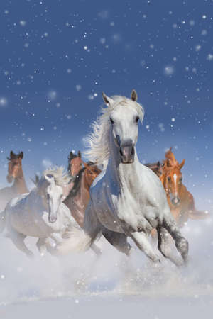 Horse herd run fast in winter snow field Stock Photo