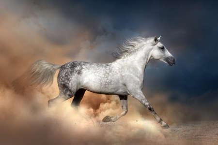 desert sand: Orlov horse run in dust