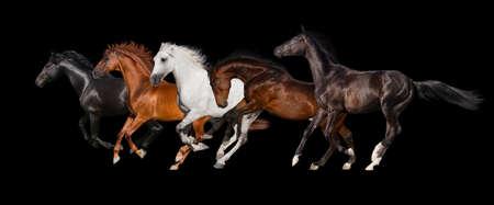 Paard kudde geïsoleerd op een zwarte achtergrond Stockfoto - 50595730