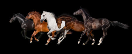 Horse herd isolated on black background
