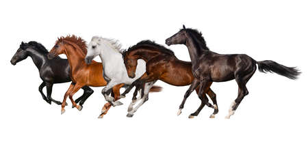 Horse herd isolated on white background