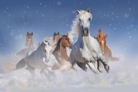 Horse herd run fast in winter snow field Banque d'images