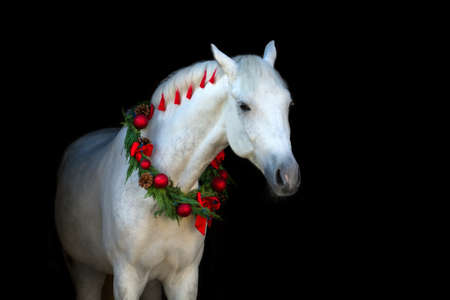 Christmas image of a white horse wearing a wreath and a bow on black background Фото со стока