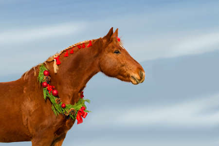 Christmas image of a red horse wearing a wreath and a bow