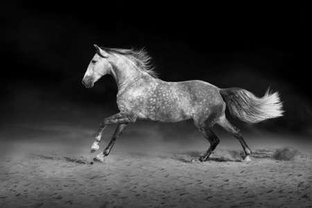 draft: Grey horse on dark background