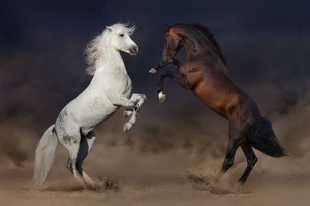 Two horses rearing up in desert dust Фото со стока