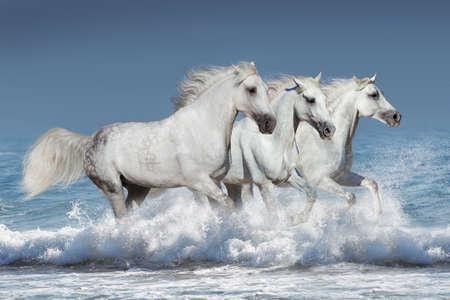caballo saltando: manada de caballos Galope de la corrida de olas en el océano