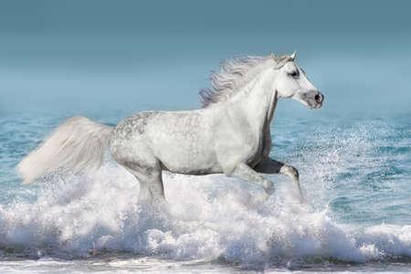 Witte hengst run galop in golven in de oceaan