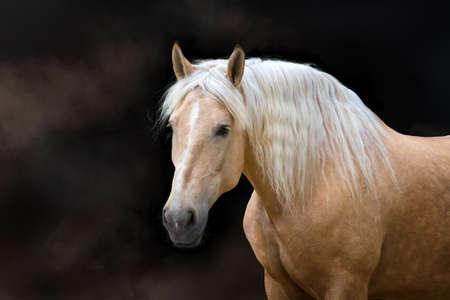 Palomino konia z długimi blond grzywą