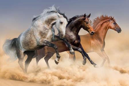 3頭の馬がほこりでギャロップを実行します。