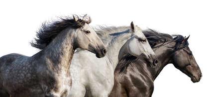 ギャロップは、白い背景で隔離を実行馬群れ肖像画