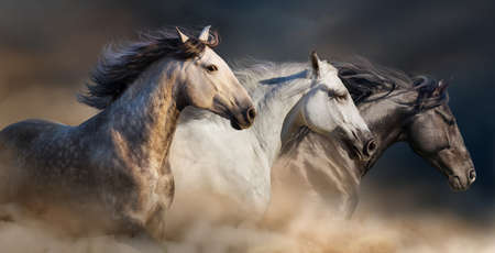 three animals: Horses with long mane portrait run gallop in desert dust