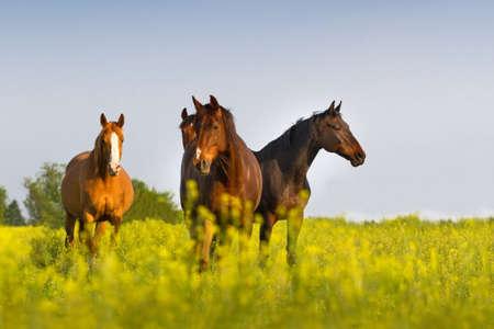 Horse herd on pasture Stockfoto