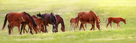 Horse herd on pasture Imagens
