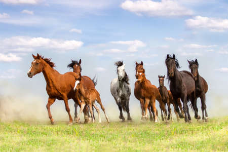 galloping: Horse herd with mare and foals walk on pasture Stock Photo