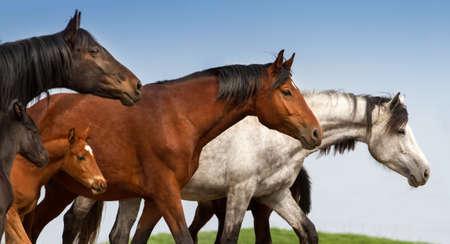 caballo: Retrato de yeguas y potros en pastos studfarm