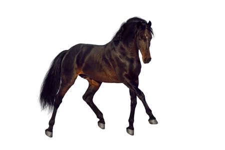 trotting: Bay stallion trotting on white background Stock Photo