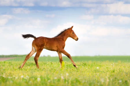ベイ馬春の牧草地で実行