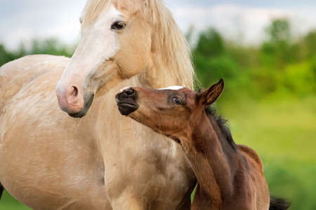Beautiful mare with foal close up portrait 版權商用圖片 - 58756952