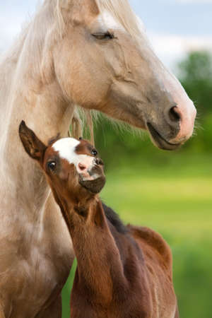 mare and foal: Beautiful mare with foal close up portrait
