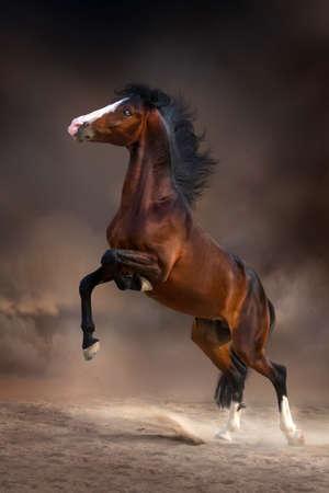 caballo saltando: Semental hermoso de la bahía se alza para arriba en el polvo del desierto en la oscuridad Foto de archivo
