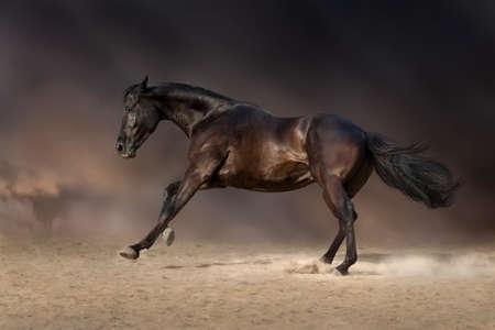 desert storm: Black stallion run gallop in desert storm