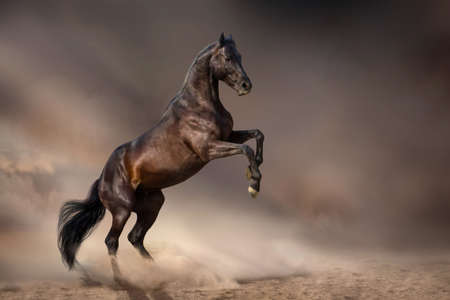 Black stallion rearing up in desert storm Imagens