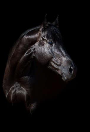 Black horse portrait on black