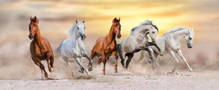 夕暮れ時の砂塵で早く走る馬の群れ 写真素材
