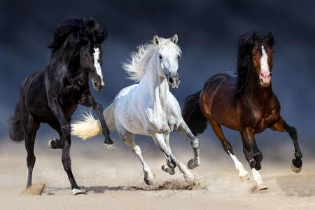 長いたてがみを持つ 3 つの馬が砂でギャロップを実行します。