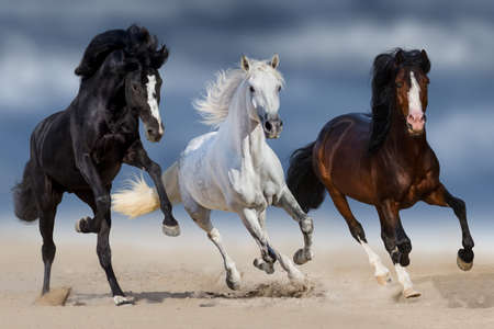 galloping: Three horse with long mane run gallop in sand